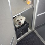 American Airlines First Class for Pets – Cuddle Class Caters to Animal Lovers