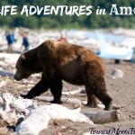 Wildlife Adventures in America