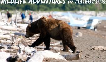 Wildlife Adventures in America