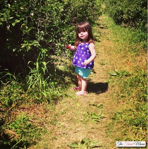 Blueberry-picking-with-a-toddler
