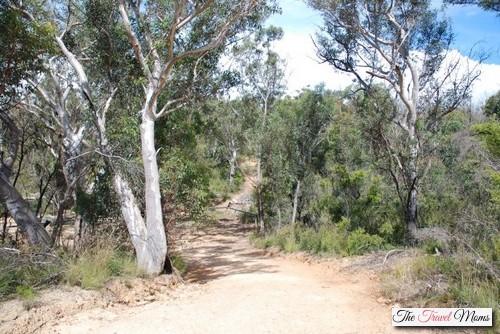 Bush-Walk-Australia