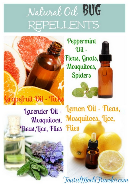 Natural Lice Repellent Oils