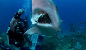 Shark Encounters for Your Next Vacation: Swim, Feed or Watch Sharks