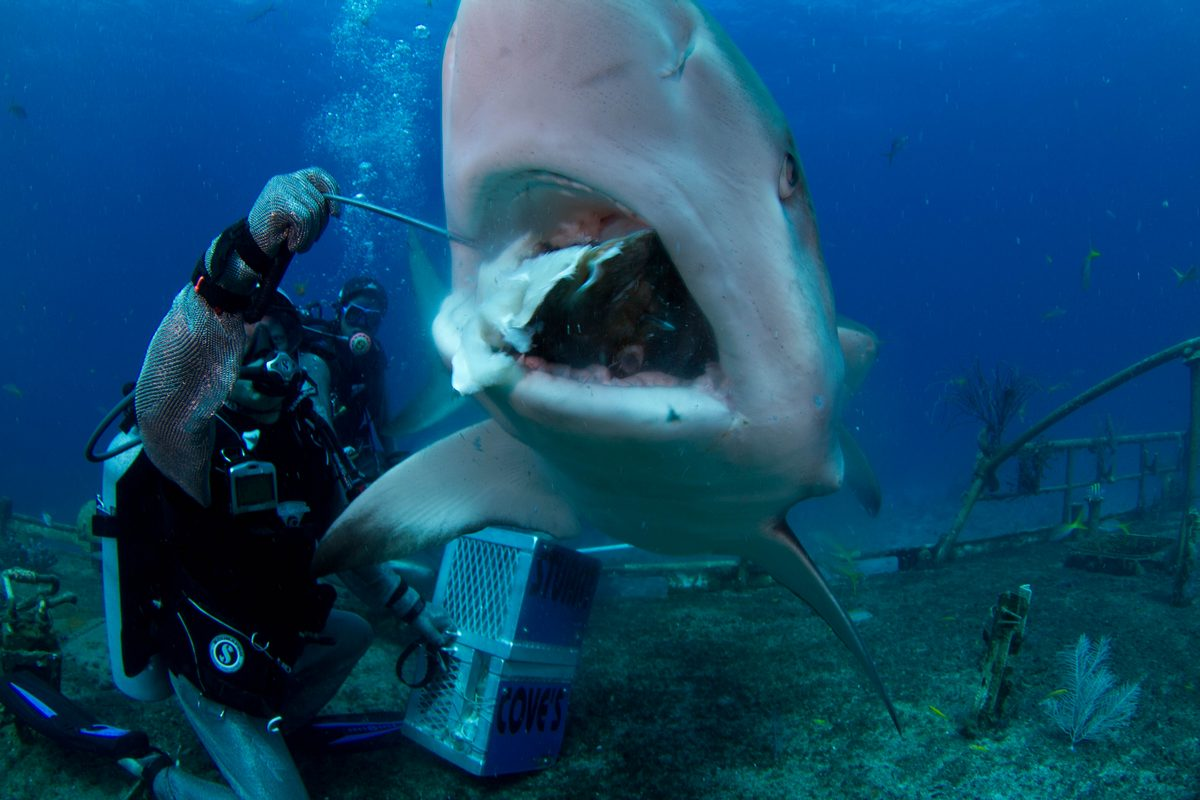 Shark Encounters For Your Next Vacation Swim Feed Or