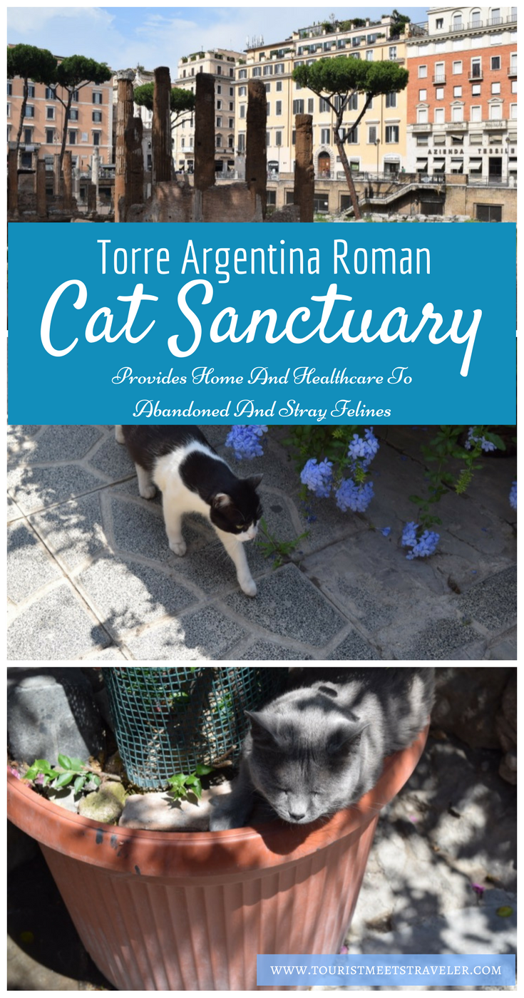 Torre Argentina Roman Cat Sanctuary Provides Home And Healthcare To Abandoned And Stray Felines