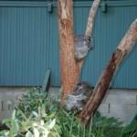 Taronga Zoo Sydney 11