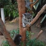 Taronga Zoo Sydney 12