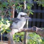 Taronga Zoo Sydney 13