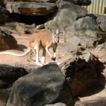 Taronga Zoo Sydney 15