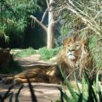 Taronga Zoo Sydney 18