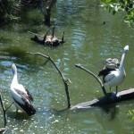Taronga Zoo Sydney 3