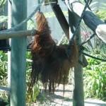 Taronga Zoo Sydney 5