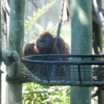 Taronga Zoo Sydney 6