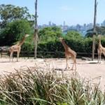 Taronga Zoo Sydney 7