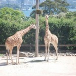 Taronga Zoo Sydney 8