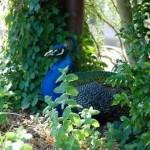 Taronga Zoo Sydney 9
