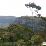 Bushwalking In Australia: A Fun Family Activity