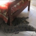 crocodile under bed 2