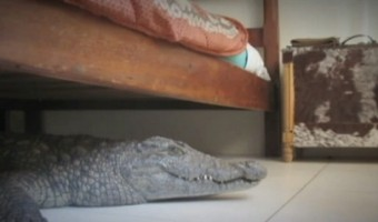 Crocodile Found Under Hotel Bed – PHOTOS