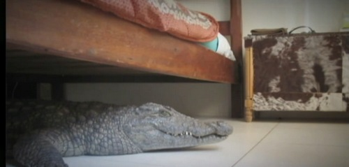 crocodile under bed