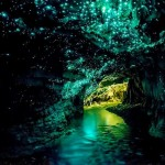 glow worm caves FEATURE IMAGE