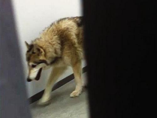 hotel, kate hansen, wolf