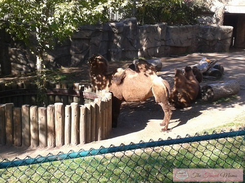 Lincoln Park Zoo 2 Tourist Meets Traveler