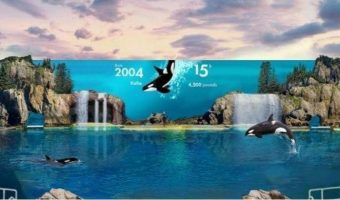 SeaWorld Announces Major Changes – New Rides and Animal Encounters