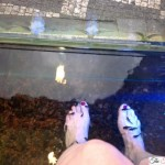 Experiencing a fish pedicure in prague czech republic for Fish pedicure locations near me