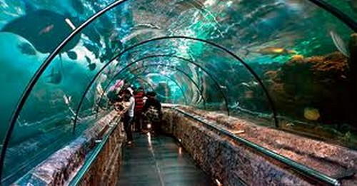 shark tunnel-Orlando